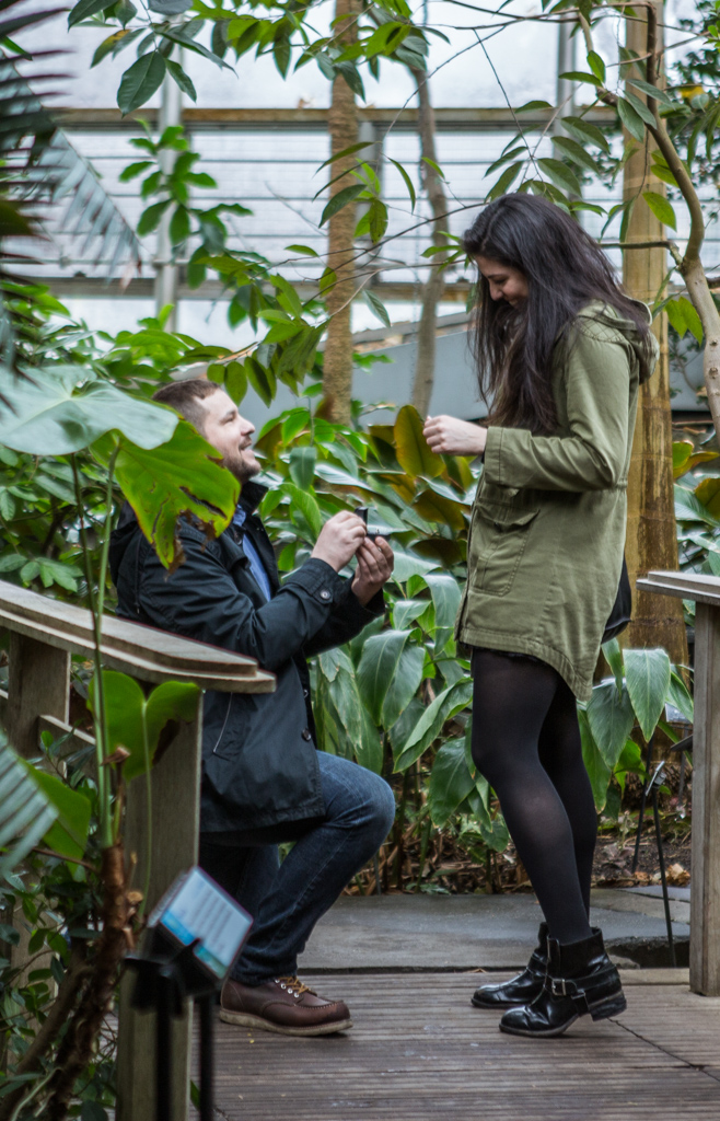 Photo 3 Wedding Proposal in Brooklyn botanical garden | VladLeto