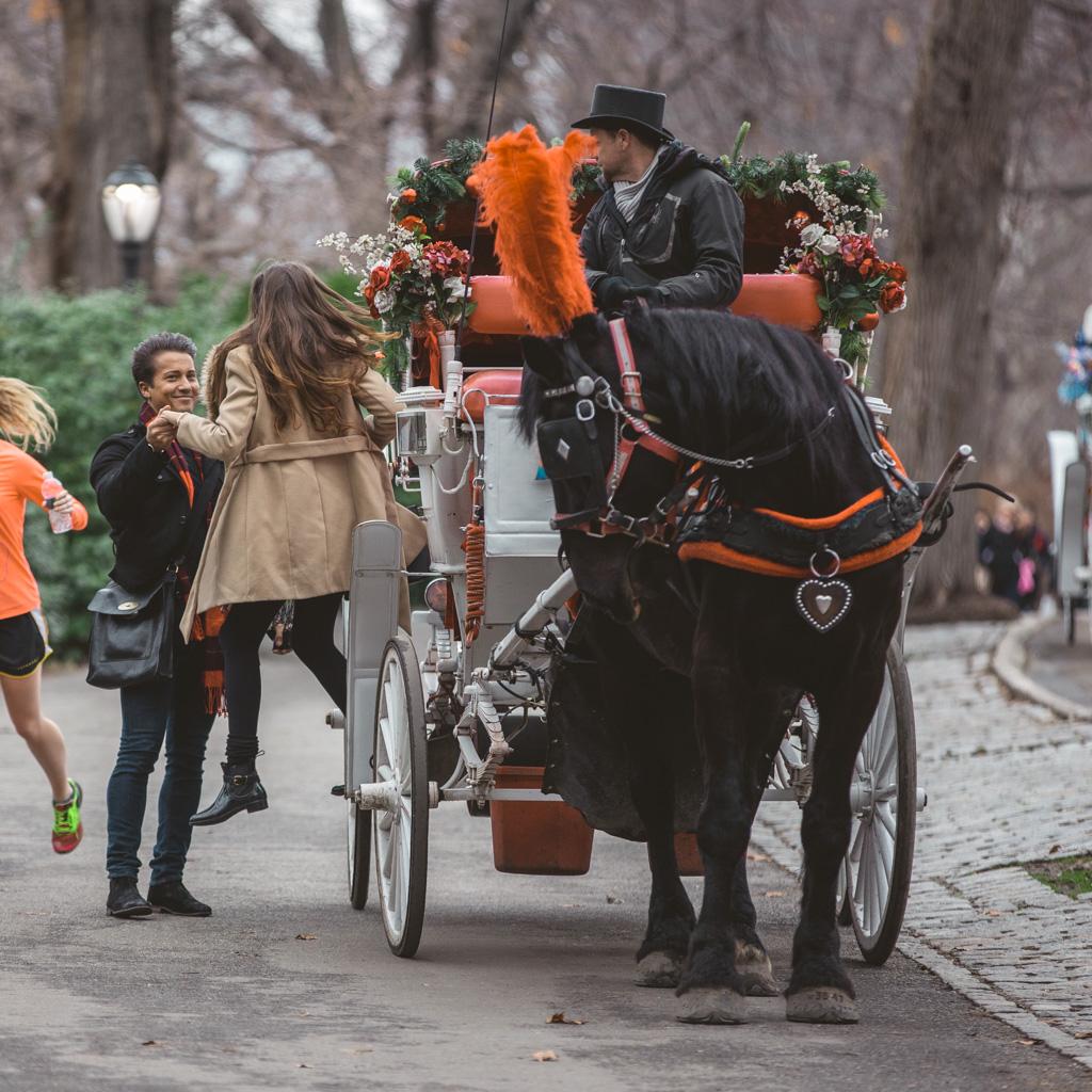 Central Park Marriage proposal under Gapstow bridge