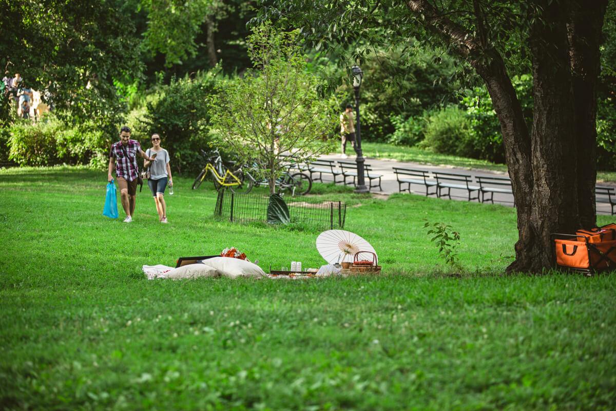 Photo 3 Central Park Picnic Proposal