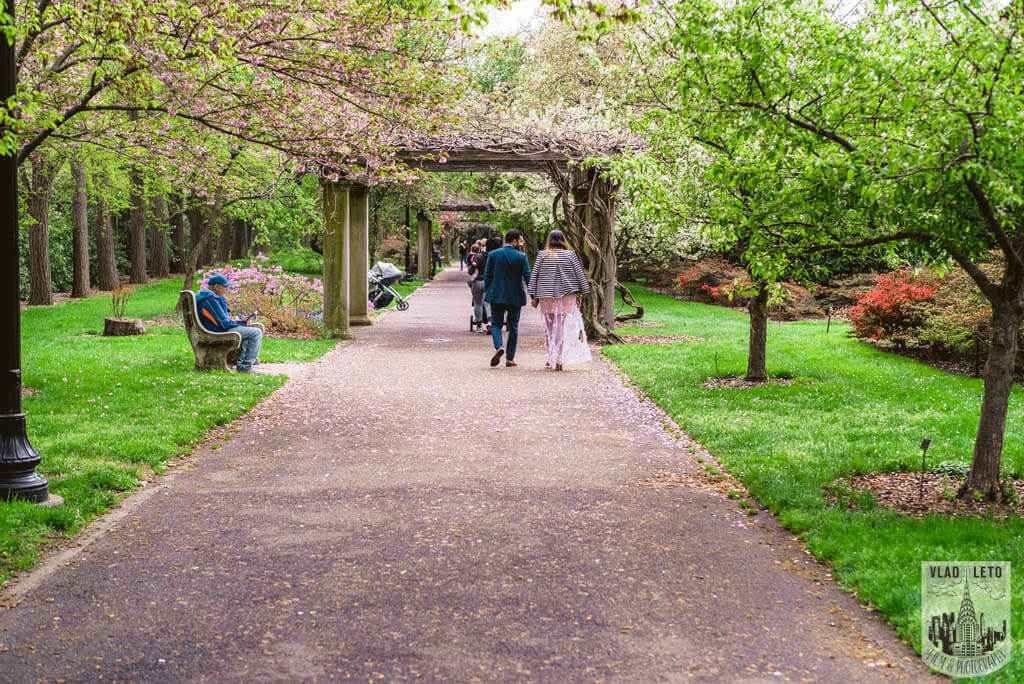 Photo 21 Cherry Blossom Marriage Proposal in Brooklyn Botanical Garden | VladLeto