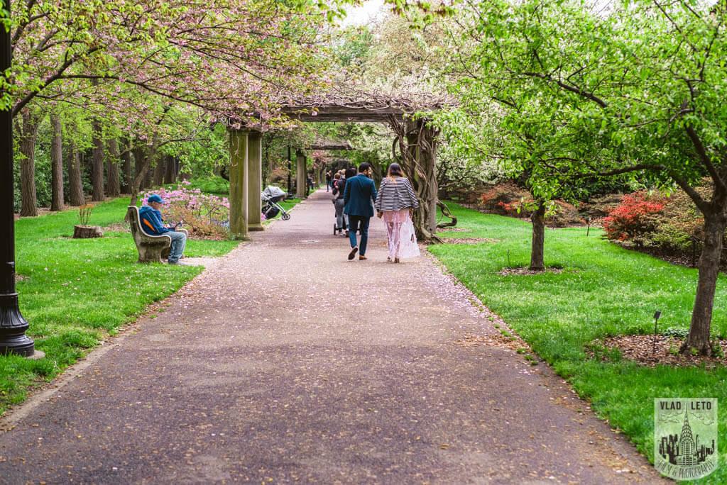 Photo 12 Cherry Blossom Marriage Proposal in Brooklyn Botanical Garden | VladLeto