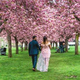 Photo Cherry Blossom Marriage Proposal in Brooklyn Botanical Garden | VladLeto